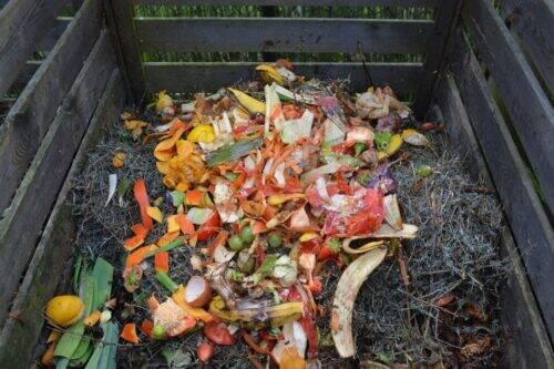 green-waste-513609_1920-1024x682