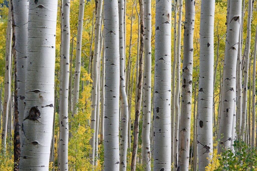 trees-690727_1920-1024x682