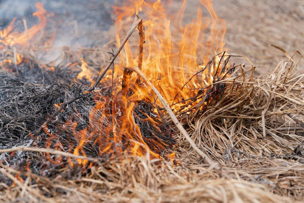dry-grass-burning-in-meadow-at-springtime-fire-and-8HDGJQ6-1024x683