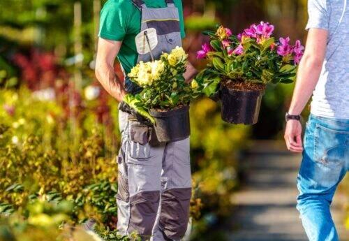 fleurs-pépinière-1024x707