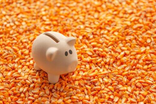 piggy-bank-on-pile-of-harvested-corn-seed-NTJQ3Z9-1024x684