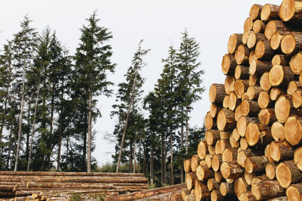 stacked-logs-freshly-logged-spruce-hemlock-and-fir-M3YY8EJ-1024x683