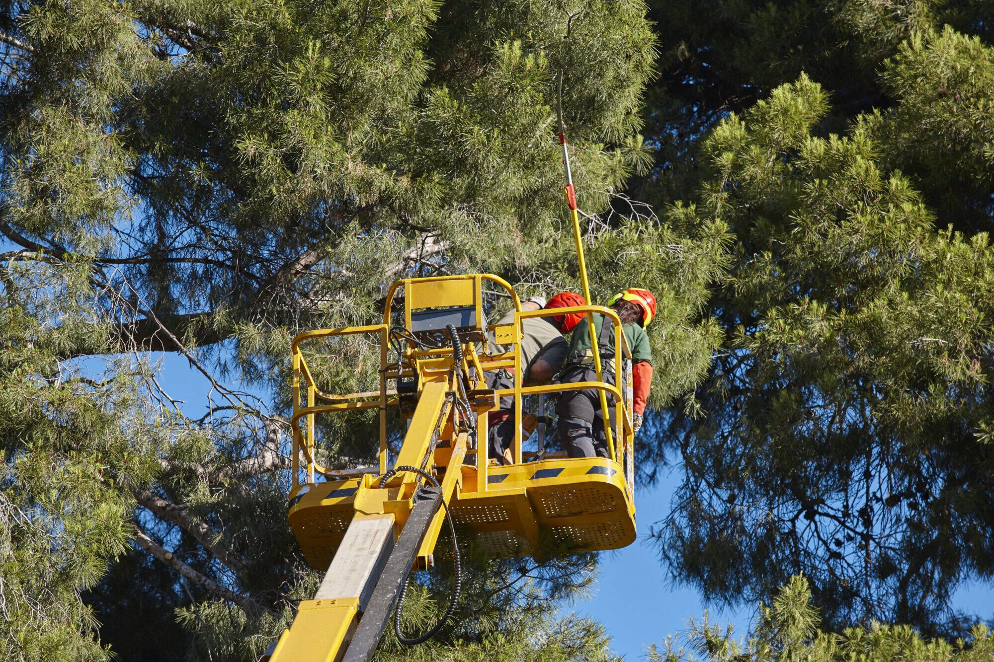 élagage arbre hydro-québec