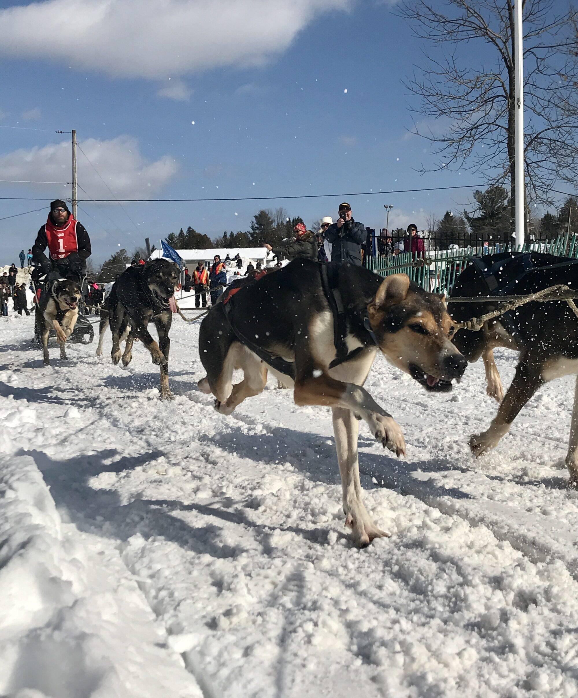 International dog derby de Maniwaki