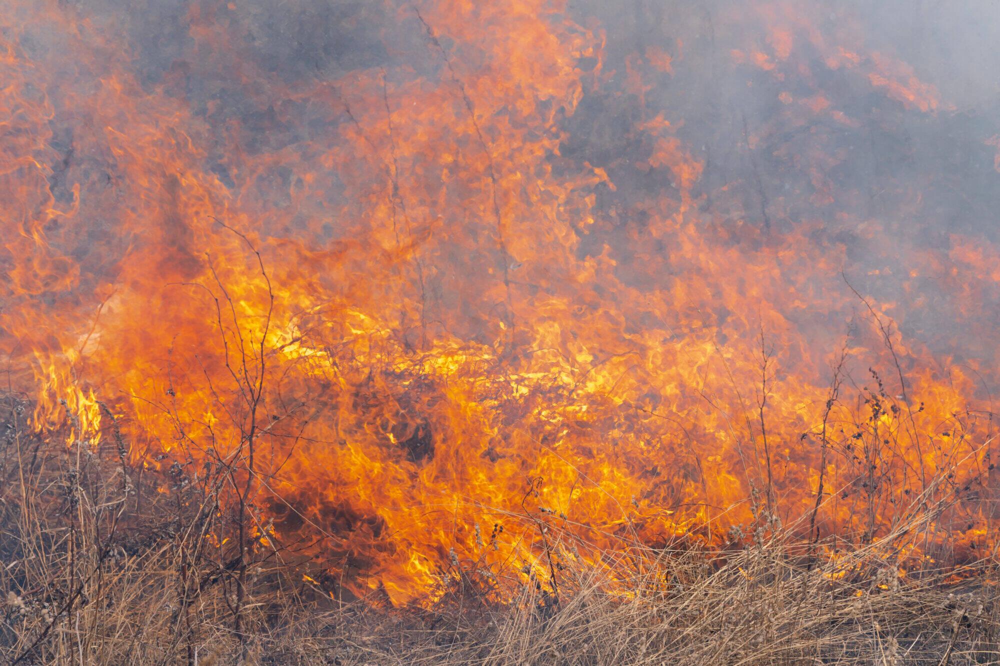 feu de forêt brousaille