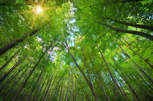 Une belle forêt qui est en forêt car c'est une forêt d'abres qui constituent une forêt